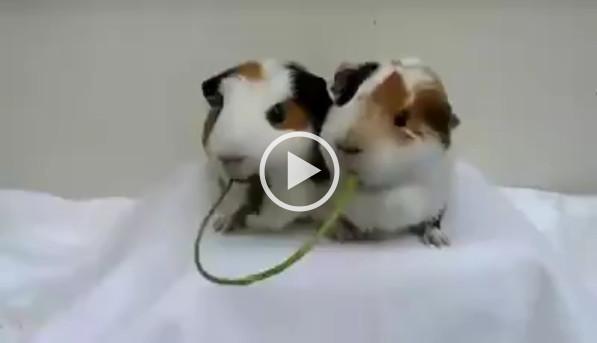 2piglets