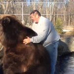 Imagini de suspans. Un bărbat se joacă cu un urs. Va supravietui?
