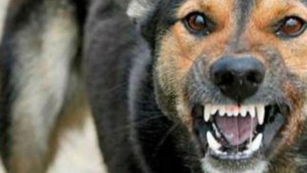 Încă o femeie omorâtă de câini: tragedia a avut loc în Răsuceni, Giurgiu