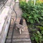 Stapana i-a cerut catelului ei sa bage pisica in casa
