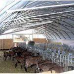 Idei pentru ferma de capre