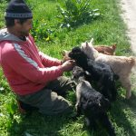 Viata e frumoasa in Rasuceni: Virgil cu 5 iedute