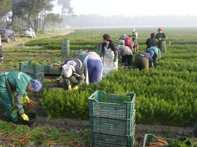 munca in strainatate ferme in Danemarca, romanii care muncesc