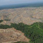 Norvegia, decizie majoră: A interzis tăierile de copaci