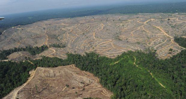 despadurire copaci