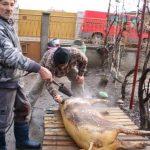 Cum taie românul porcul în Canada