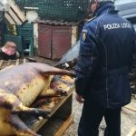 Pățania unor români care au tăiat porcul în Italia